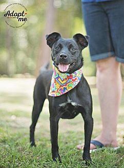 Australian Kelpie Mix Dog for adoption in Tomball, Texas - Kora