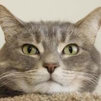 Adopt A Pet :: Kirby - Bristol, IN