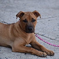 Adopt A Pet :: Jeanette - Baltimore, MD
