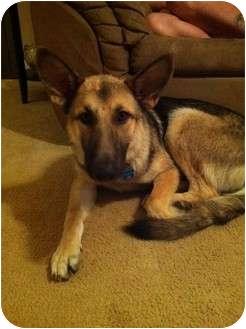 German Shepherd Dog Dog for adoption in Roswell, Georgia - Ella