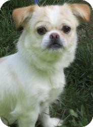 Terrier (Unknown Type, Small)/Spaniel (Unknown Type) Mix Dog for adoption in Bloomfield, Connecticut - Relay