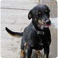 Adopt A Pet :: Boo Boo - Cedar City, UT