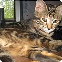 Adopt A Pet :: Nikki - Dallas, TX