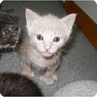 Adopt A Pet :: Tanner - Morris, PA