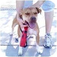 Adopt A Pet :: JEWEL - Gilbert, AZ