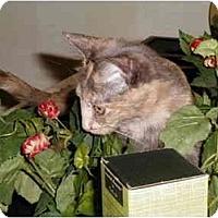 Adopt A Pet :: Possum - Greenville, SC