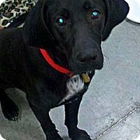 Adopt A Pet :: Bryce - Silsbee, TX