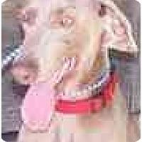 Adopt A Pet :: Brooke  **ADOPTED** - Eustis, FL