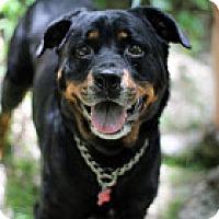 Adopt A Pet :: Bolo - Tinton Falls, NJ