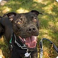 Adopt A Pet :: Johnny - Portland, OR