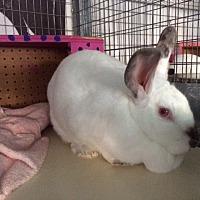 Adopt A Pet :: Organza - Mission Viejo, CA
