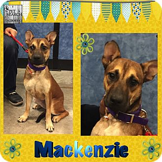 Shepherd (Unknown Type) Mix Dog for adoption in Washington, Pennsylvania - Mackenzie