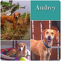 Adopt A Pet :: Audrey ADOPTED - Ontario, ON