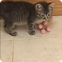 Adopt A Pet :: Zeus - Middleton, WI