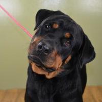 Adopt A Pet :: Zelda - West Allis, WI