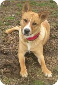 Basenji Mix Dog for adoption in Richmond, Virginia - Caleb*Foster Needed