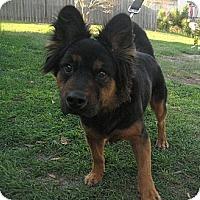 Adopt A Pet :: Barry - Jacksonville, FL