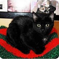 Adopt A Pet :: Cassie - Farmingdale, NY