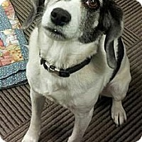 Adopt A Pet :: LUCY (COURTESY POSTING) - Phoenix, AZ