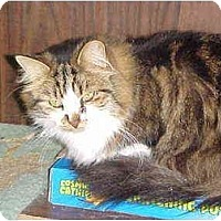 Adopt A Pet :: Rustie - Quincy, MA