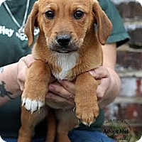 Adopt A Pet :: Summer - South Jersey, NJ