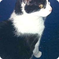 Adopt A Pet :: Riley - Oberlin, OH
