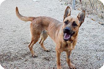 German Shepherd Dog Mix Dog for adoption in Meridian, Idaho - Laika