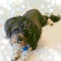 Adopt A Pet :: Evie - Omaha, NE