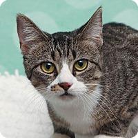 Adopt A Pet :: Milaya - Chippewa Falls, WI