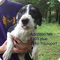 Adopt A Pet :: Woods - Kittery, ME