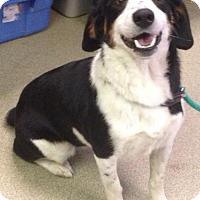 Adopt A Pet :: Tayla - Valley Falls, KS