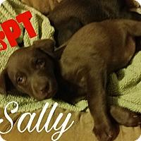 Adopt A Pet :: Sally - Hesperia, CA