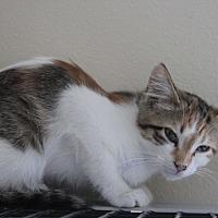 Adopt A Pet :: Dori - Cuero, TX