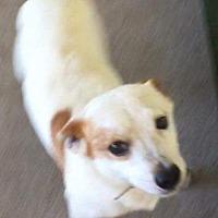 Adopt A Pet :: Tracker - Venice, FL