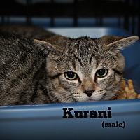 Adopt A Pet :: Kurani - Springfield, PA