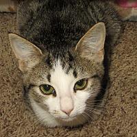 Adopt A Pet :: Debra - Lexington, KY