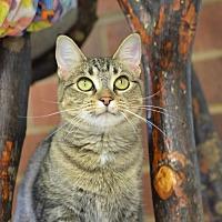 Adopt A Pet :: Kitro170879 - Atlanta, GA