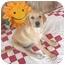 Photo 1 - Labrador Retriever/Golden Retriever Mix Puppy for adoption in McArthur, Ohio - Brie