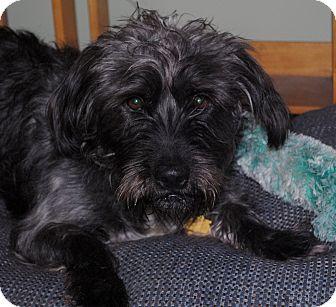 Basset Hound/Terrier (Unknown Type, Medium) Mix Dog for adoption in Medford, New Jersey - Thadius
