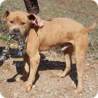Adopt A Pet :: Diesel - Athens, GA