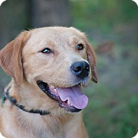 Adopt A Pet :: Toto - Lewisville, IN