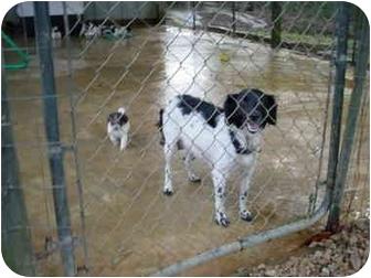 Border Collie/Collie Mix Dog for adoption in Cairo, Georgia - Lola