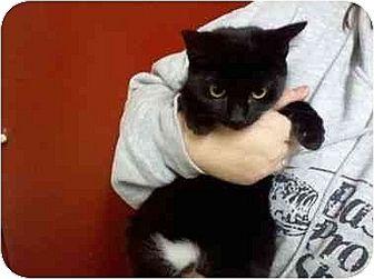 Domestic Mediumhair Cat for adoption in Sandersville, Georgia - Connie