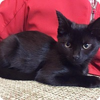 Adopt A Pet :: Tracy - Xenia, OH