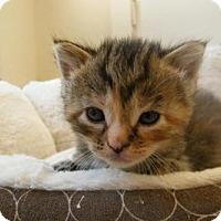 Adopt A Pet :: Amelia - Orlando, FL