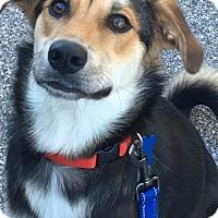 Adopt A Pet :: Maddie - St Louis, MO