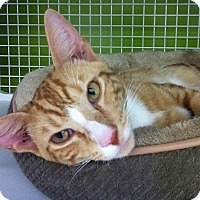 Adopt A Pet :: Orange Tango - Seminole, FL