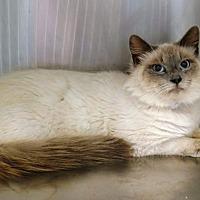 Adopt A Pet :: Max - adoption pending - Hockessin, DE