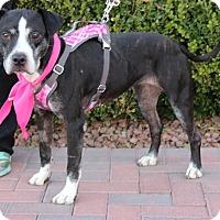 Adopt A Pet :: CECE - Las Vegas, NV