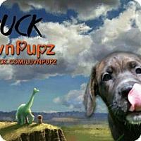 Adopt A Pet :: Buck - Wyoming, MI